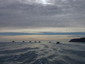 Beluga Racing to Beluga site