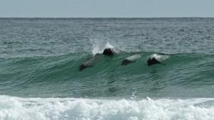 Surfing Dolfins